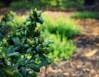 Case Study: Beginning Gardener 9/9