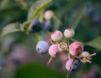 Case Study: Fruit Trees 5/8