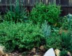 Case Study: Beginning Gardener 4/9