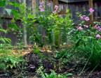 Case Study: Beginning Gardener 7/9