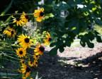 Case Study: Building Soil 9/9